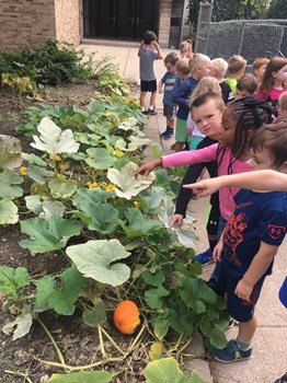 Preschool Picking Pumpkin Seeds